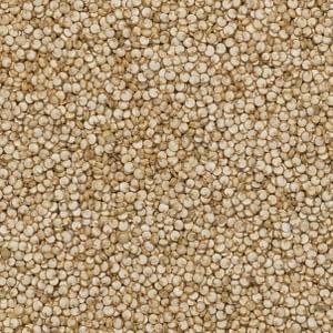 Quinoa vit från Sydamerika